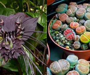 Top 10 Weird Plants You Might Want to Consider in Your Home