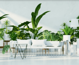 TOP 6 Décor Tips To Make Your Home A Tropical Paradise