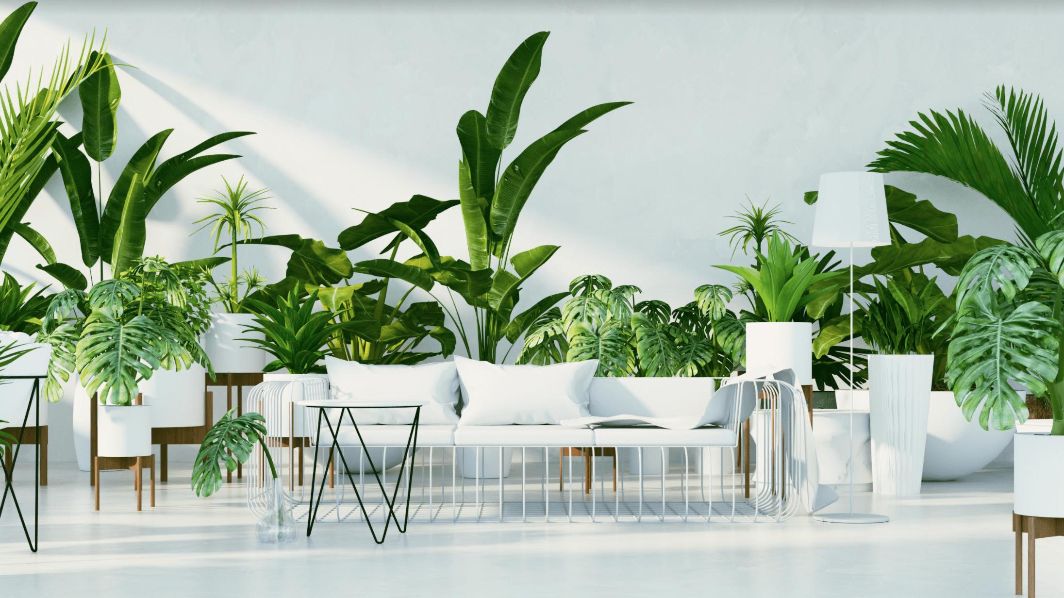 Tropical-Home