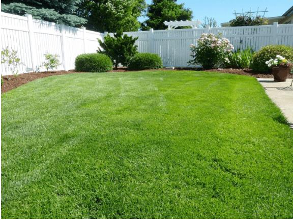 back-yard-grass