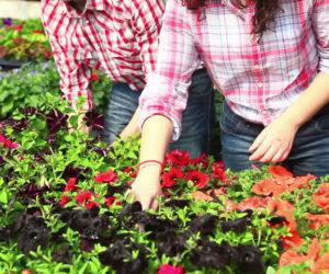 Top 5 Gardening Tips for Beginners