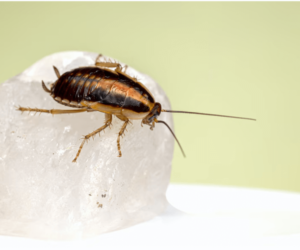 Top 4 Ways To Prevent Pest Infestations